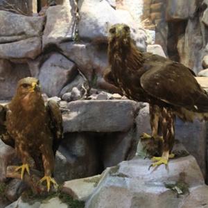 Фото Музей природы и палеонтологии